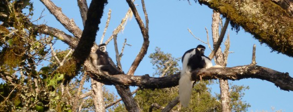 Monkey-pic
